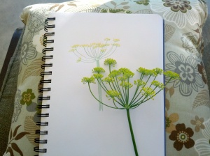 Fennel Sketch